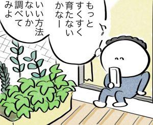夫のベランダ菜園レポート 〜コバエの楽園〜
